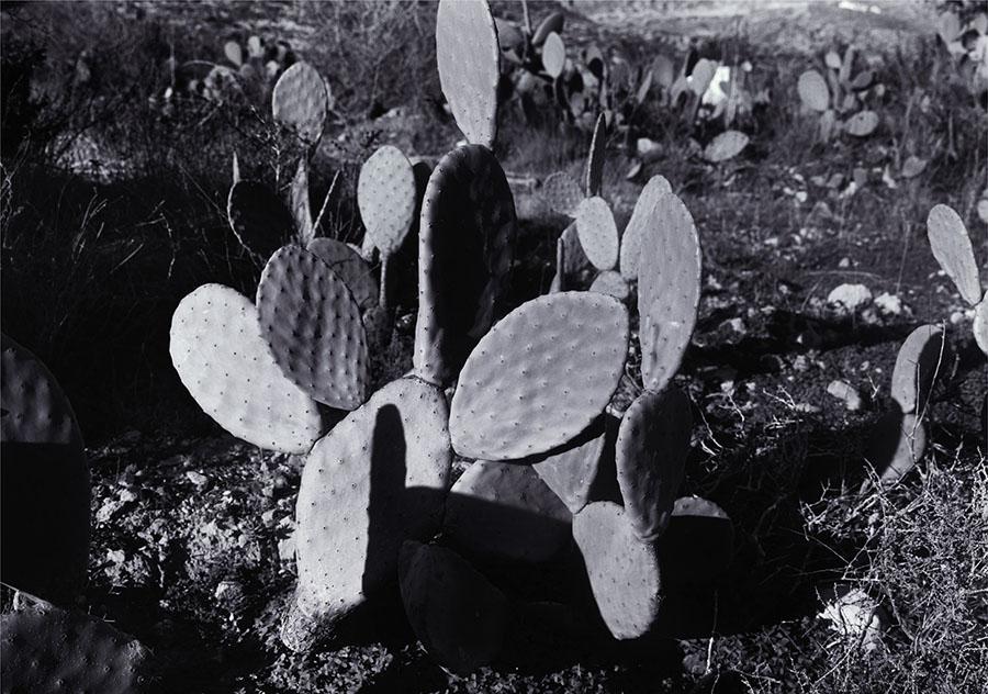 A Future Life (Cactus), 2006