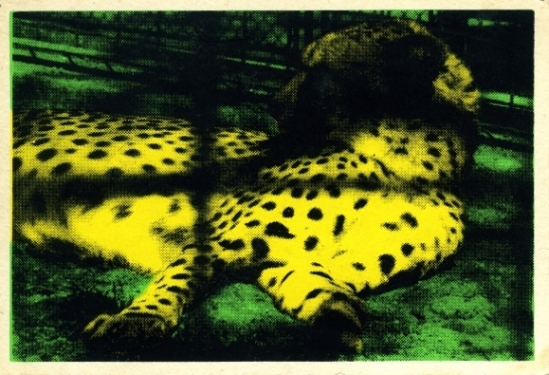 juliao-sarmento-cheeta