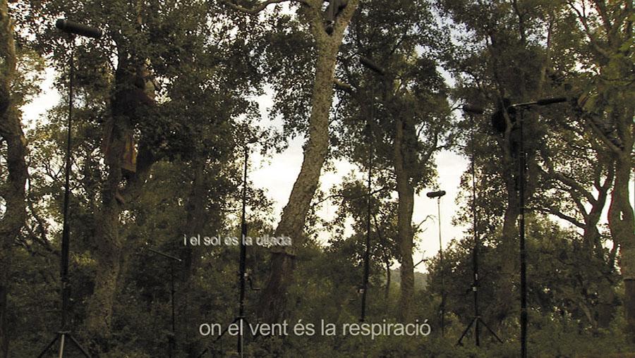 Assaig de mimologia forestal, 2005