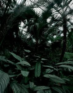 Palmengarten IV. Frankfurt, 2007