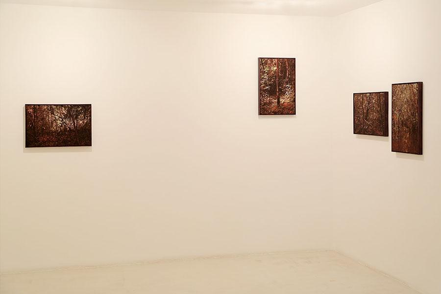Serie Altamira, 2013