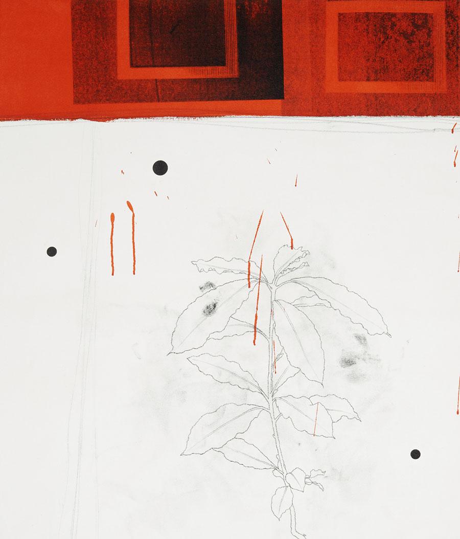 Plant Red Frame, 2011