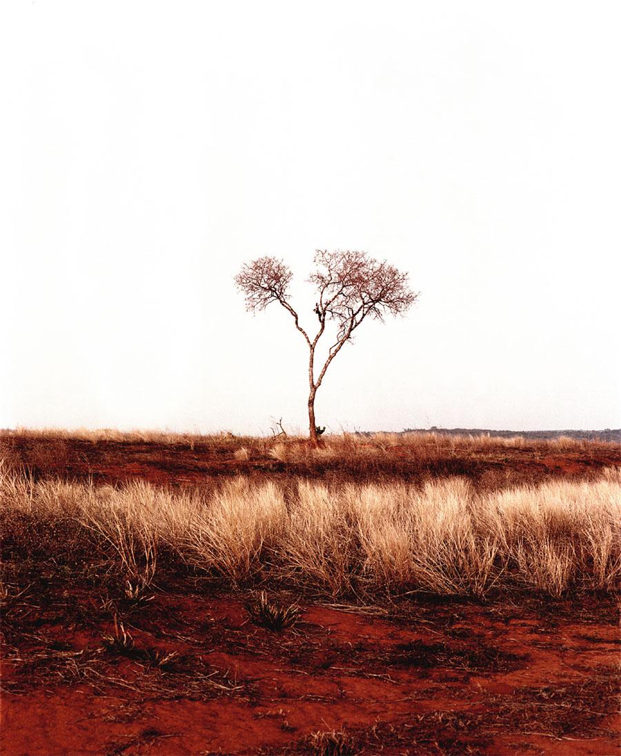 Goiania VII, 2003