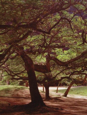 acacia-rubra-2016-ed-2-5-247x191cm