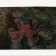 2020-marcel-rubio-la-fauna-marina-de-ripollet-es-riquissima-6x8cm